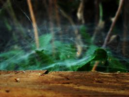 Spider's Paradise by AndehDulac