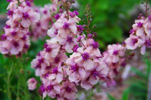 pink flowers-2 by Grace-love-kindness
