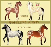 Waldgeist Adopts - CLOSED by Drasayer