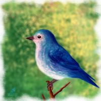 Liitle blue bird by SubhrajitDatta