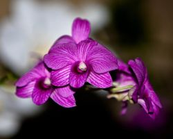 orchid print 2 by ST77
