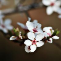 Not black horse but cherry tree by Milie-Photography