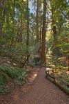 Muir Woods Trail IV - Exclusive HDR Stock by somadjinn