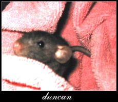 baby duncan by heartset