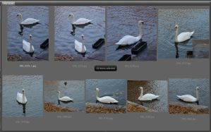 Swan Unrestricted by ManicHysteriaStock