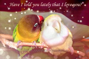 Happy Valentine to everyone and every bird! by emmil
