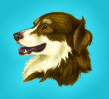 Aussie Shep by cricket00fur