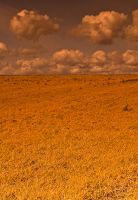 Yellow Field I by V0NMooN