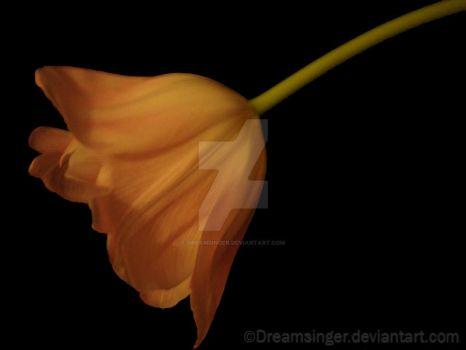 'There is no greater sorrow.. by Dreamsinger