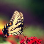 le papillon by wishinbubble