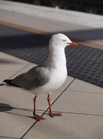 City Seagull by HempHat