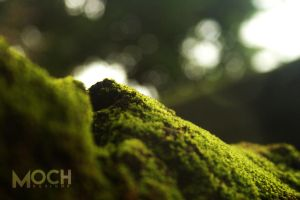 Miniature Landscapes 02 by mocheee