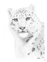 Snow Leopard Final by mikebontoft