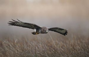 Low Flying by BogdanBoev