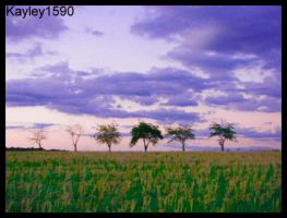 Six Trees Side By Side by Kayley1590