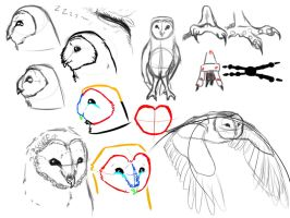 Barn owl study by Snow-wolf601