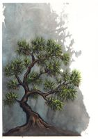 Lone Pine by dcwilson