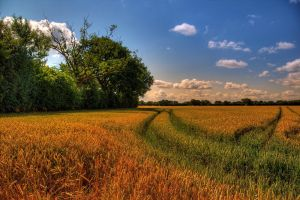 Path in the grain by chevyhax