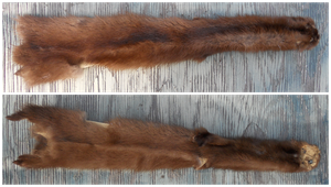 Brown Ranched Mink by Roki-Ziro