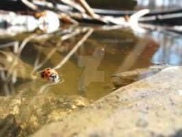 Ladybug On The Water by BrielleNicole