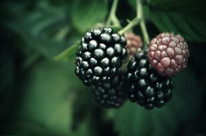Blackberry by Szilkx
