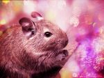 Dreamin' about Degu by Andenne