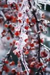Ice Berry II by sevymama