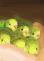 Baby Budgies by Super-Cute