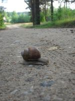 very slow snail by 11Domi