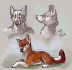 Ethiopian Wolf Sketches by ThayRustback