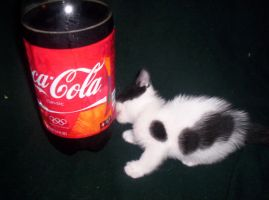 Spotty loves Coke by LadyIlona1984