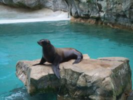 Sea Lion by JennHolton