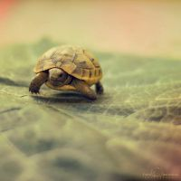 Little turtle by CloverSpyF