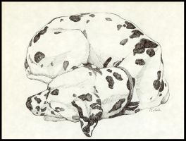 Sleeping Dalmation by TheManWhoWouldBeKing