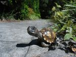 Chilean Tortoise by ART-fromthe-HEART