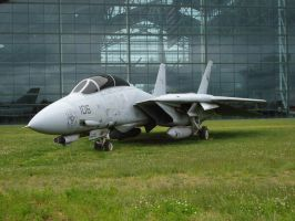 Tomcat by Barghest1031