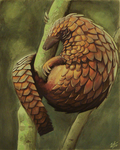 Pangolin by WesTalbott