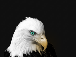 Before The Eagle Soars by TJ-7