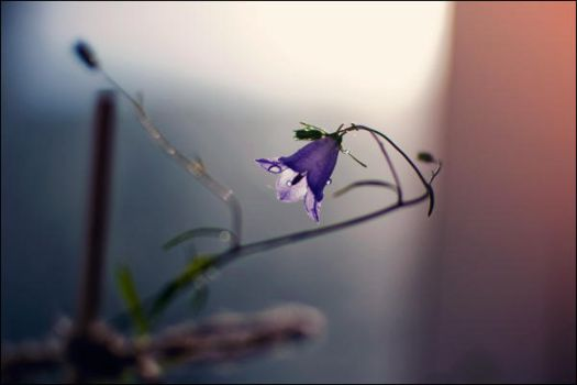 Bluebell 2 by Condanna