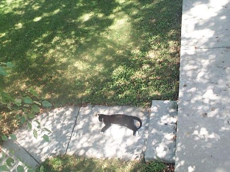 Sunbathing Kitty by NothingConsequential