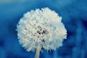 .:Ice Flower:. by bogdanici