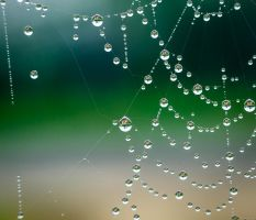 Pearls in the spiderweb by sztewe