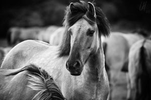 wild one - bw-version by UniHydra