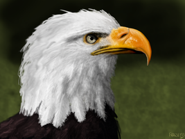 Digital Painting - Helga The Bald Eagle by Fragsey