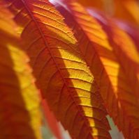 Autumn leaves by lori80