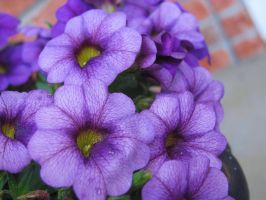 Purple Flowers 3 by Cryanth