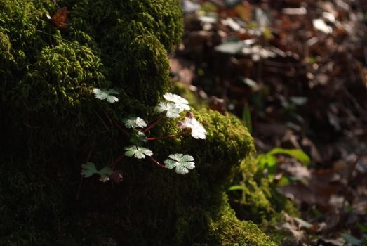 Mossy 3 by Very-Free-Stock