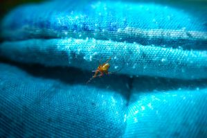 Spider on my bed 2 by bucaralook