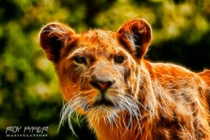 Lioness: Fractalius Re-Edit by nerdboy69