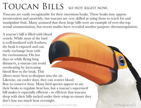 Science Fact Friday: Toucan Thermoregulation by Alithographica